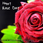 Rose Day Special Card Twitter
