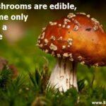 Short Mushroom Quotes Twitter