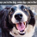 Silly Dog Quotes