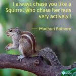 Squirrel Photography Quotes