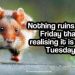 Tuesday Jokes Quotes Facebook