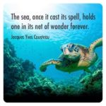 Turtle Quotes And Sayings Twitter