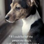 Wise Dog Quotes Pinterest