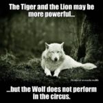 Wolf Lion Quotes Facebook